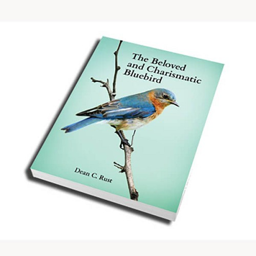 Beloved and Charismatic Bluebird
